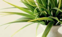 Les plantes dans la décoration intérieure