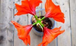 Une ribambelle de fleurs déco dans notre intérieur